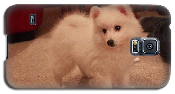 Galaxy S5 Case featuring the photograph Daisy - Japanese Spitz by David Grant