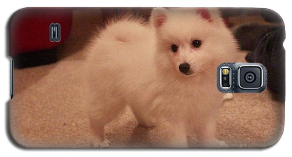 Daisy - Japanese Spitz Galaxy S5 Case