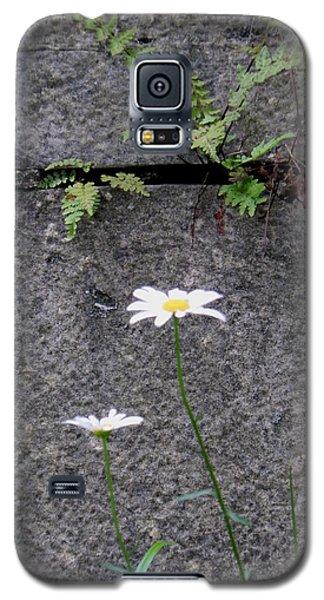 Daisy Loves Fern Galaxy S5 Case