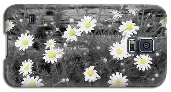 Galaxy S5 Case featuring the photograph Daisy Patch by Benanne Stiens