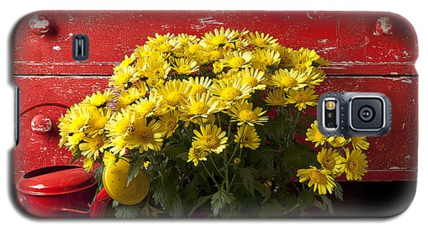 Daisy Plant In Drawers Galaxy S5 Case by Garry Gay