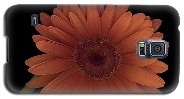 Daisy Tilt Galaxy S5 Case by Heather Kirk
