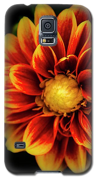 Galaxy S5 Case featuring the photograph Dalaya Shiva Dahlia by Julie Palencia