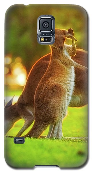 Galaxy S5 Case featuring the photograph Damn Flies, Yanchep National Park by Dave Catley