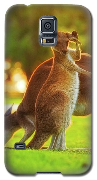 Damn Flies, Yanchep National Park Galaxy S5 Case by Dave Catley