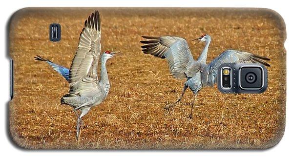 Dance Ritual, Sandhill Cranes Galaxy S5 Case
