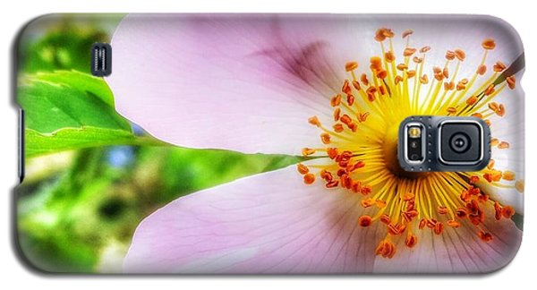 Galaxy S5 Case featuring the photograph Dancers In The Wind by Isabella F Abbie Shores FRSA