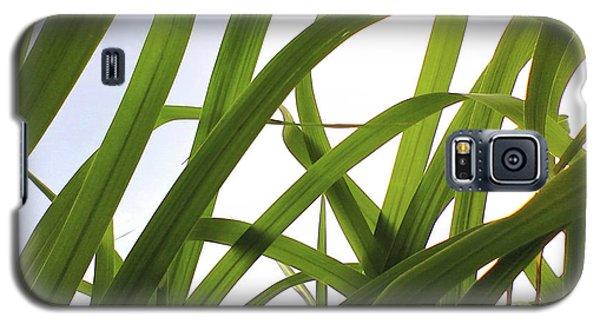 Dancing Bamboo Galaxy S5 Case by Rebecca Harman