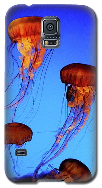 Galaxy S5 Case featuring the photograph Dancing Jellyfish by Anthony Jones