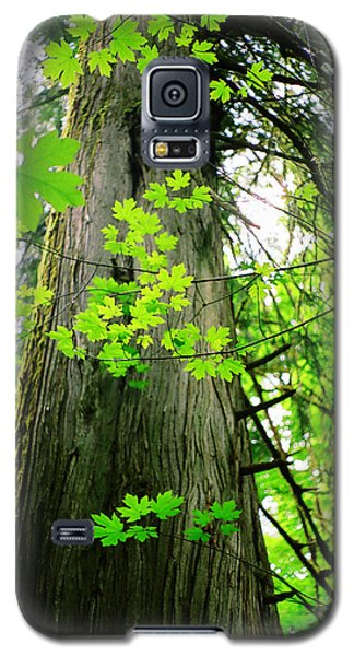 Galaxy S5 Case featuring the photograph Dancing Leaves by Kathy Bassett