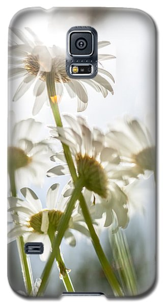 Dancing With Daisies Galaxy S5 Case by Aaron Aldrich