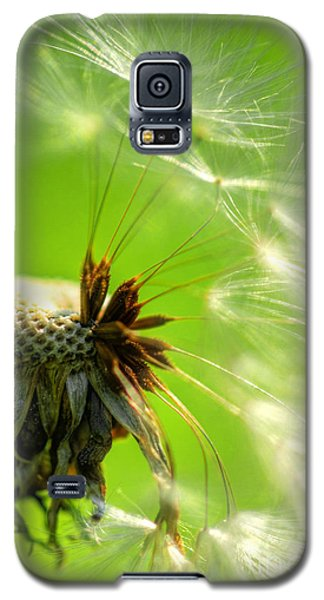 Galaxy S5 Case featuring the photograph Dandelion by Alana Ranney
