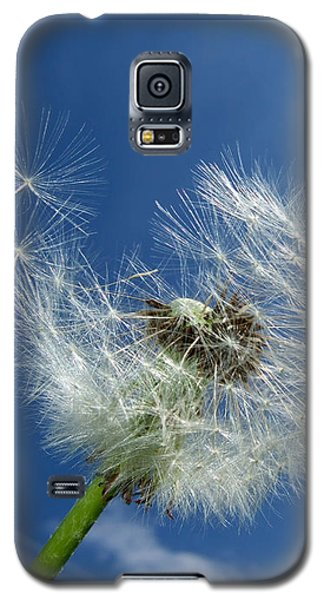 Dandelion And Blue Sky Galaxy S5 Case