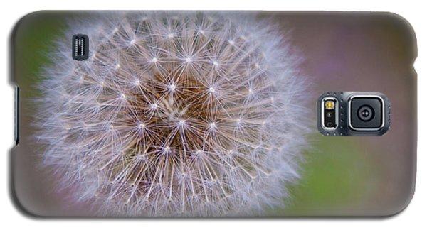 Dandelion Galaxy S5 Case by April Reppucci