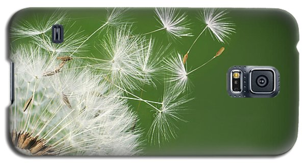 Galaxy S5 Case featuring the photograph Dandelion Blowing by Bess Hamiti