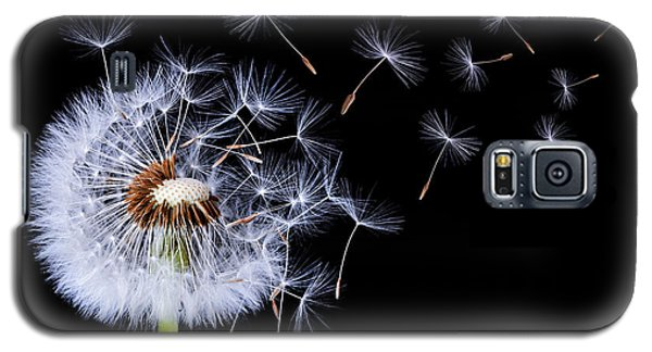 Galaxy S5 Case featuring the photograph Dandelion Blowing On Black Background by Bess Hamiti