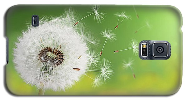 Galaxy S5 Case featuring the photograph Dandelion Clock In Morning by Bess Hamiti
