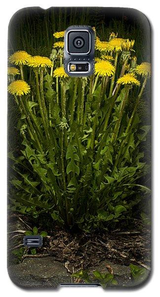 Dandelion Clump Galaxy S5 Case