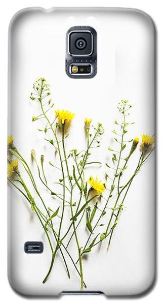 Dandelion Galaxy S5 Case by Elena Nosyreva