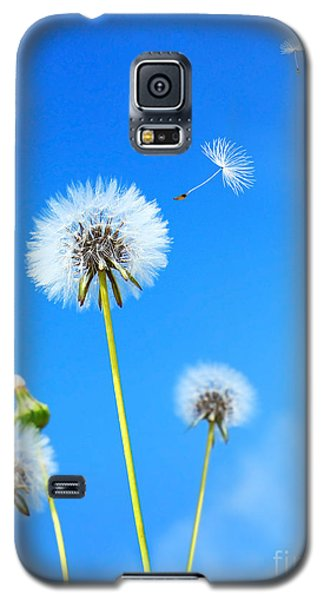Dandelion Field Galaxy S5 Case