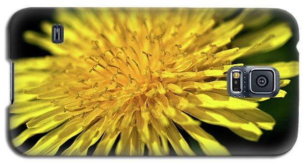 Dandelion Flower Galaxy S5 Case