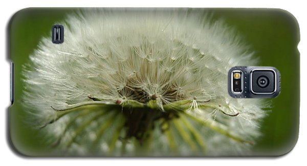 Galaxy S5 Case featuring the photograph Dandelion by Heidi Poulin