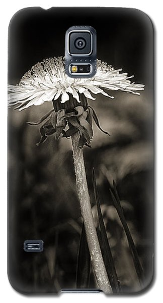 Dandelion In Black And Wite Galaxy S5 Case