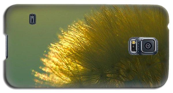 Dandelion In Green Galaxy S5 Case