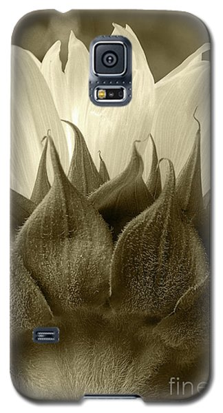 Galaxy S5 Case featuring the photograph Dandelion In Sepia by Micah May