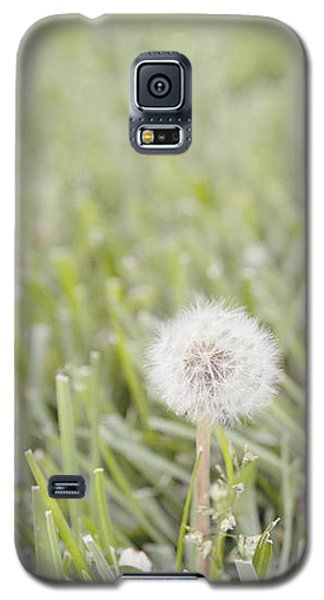 Galaxy S5 Case featuring the photograph Dandelion In The Grass by Cindy Garber Iverson