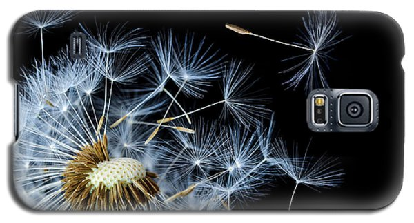 Galaxy S5 Case featuring the photograph Dandelion On Black Background by Bess Hamiti