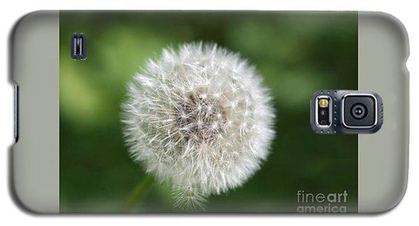 Dandelion - Poof Galaxy S5 Case by Susan Dimitrakopoulos