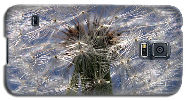 Dandelion Galaxy S5 Case by Ralph A  Ledergerber-Photography