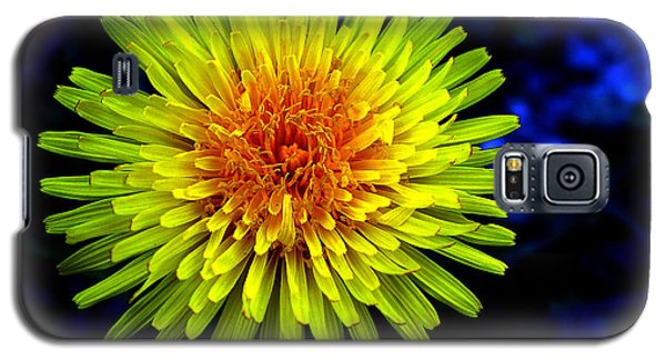 Dandelion Galaxy S5 Case by Robert Knight
