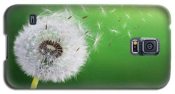 Galaxy S5 Case featuring the photograph Dandelion Seed by Bess Hamiti
