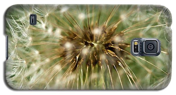 Dandelion Seed Head Galaxy S5 Case