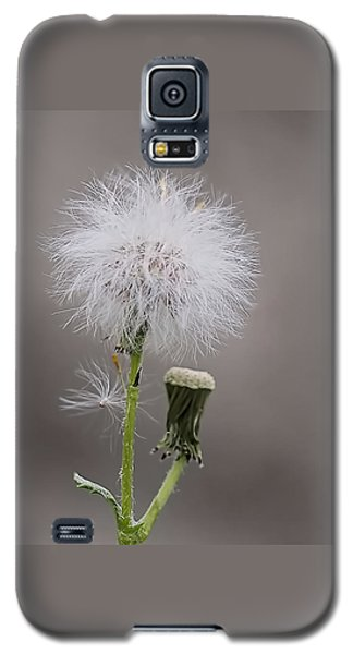 Galaxy S5 Case featuring the photograph Dandelion Seed Head by Rona Black