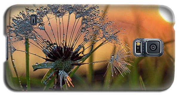 Dandelion Sunset 2 Galaxy S5 Case