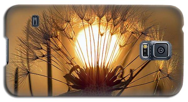 Dandelion Sunset Galaxy S5 Case