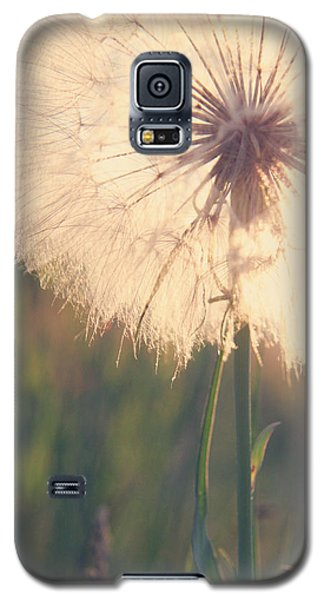 Dandelion Sunshine Galaxy S5 Case