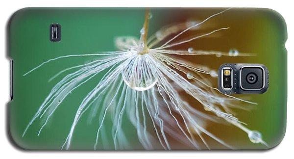 Dandelion Water Drop Macro 2 Galaxy S5 Case
