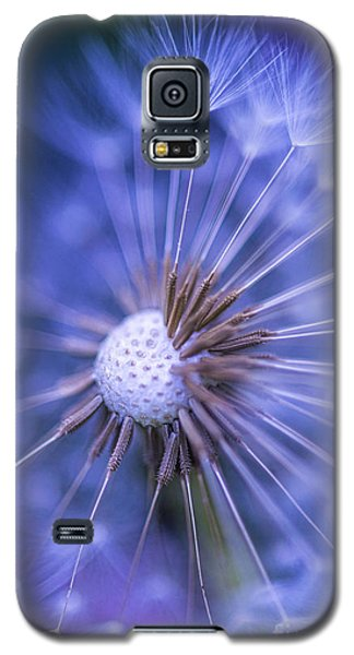 Dandelion Wish Galaxy S5 Case by Alana Ranney