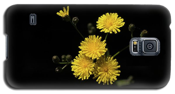Dandelions Galaxy S5 Case