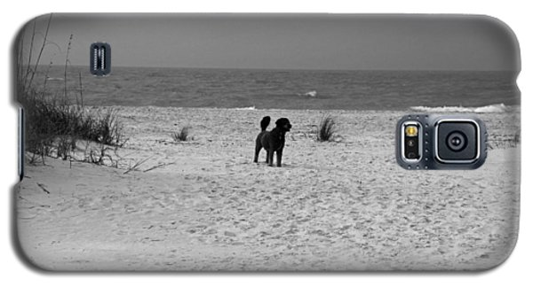Galaxy S5 Case featuring the photograph Dandy On The Beach by Michiale Schneider