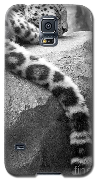 Dangling And Dozing In Black And White Galaxy S5 Case by Mary Mikawoz