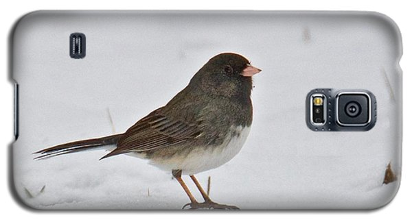 Galaxy S5 Case featuring the photograph Dark-eyed Junco 1217 by Michael Peychich