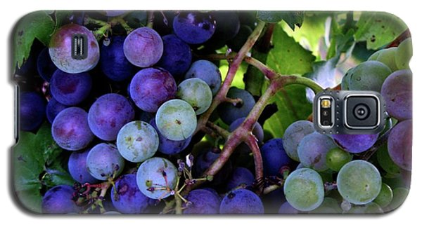 Galaxy S5 Case featuring the photograph Dark Grapes by Carol Sweetwood