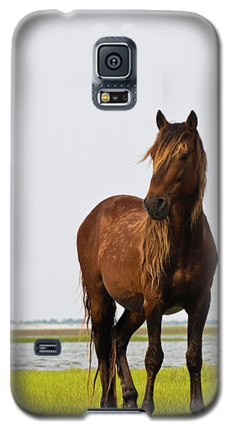 Dark Stallion Galaxy S5 Case by Bob Decker