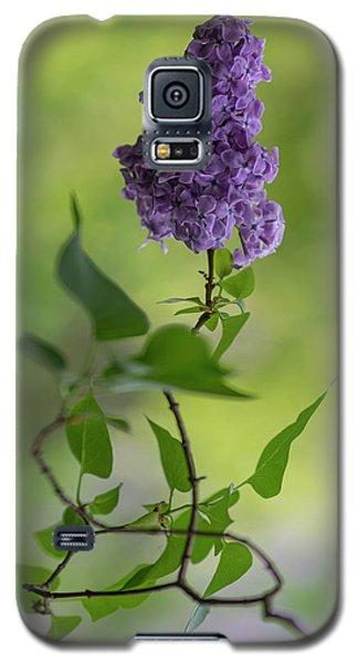 Dark Violet Lilac Galaxy S5 Case