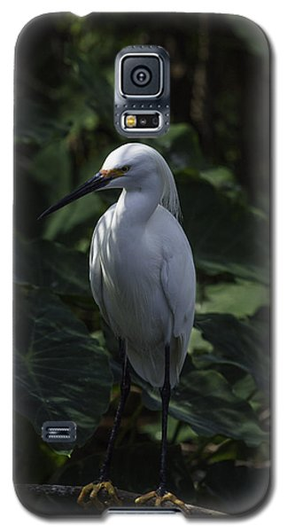 Galaxy S5 Case featuring the photograph Date Night by Rob Wilson